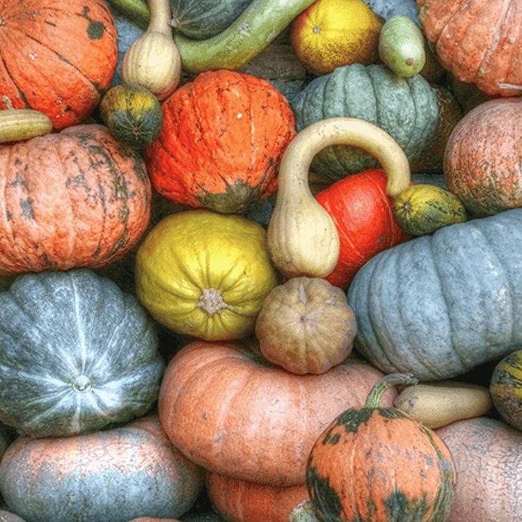 5 Dinge, die man gemeinsam im Herbst machen kann