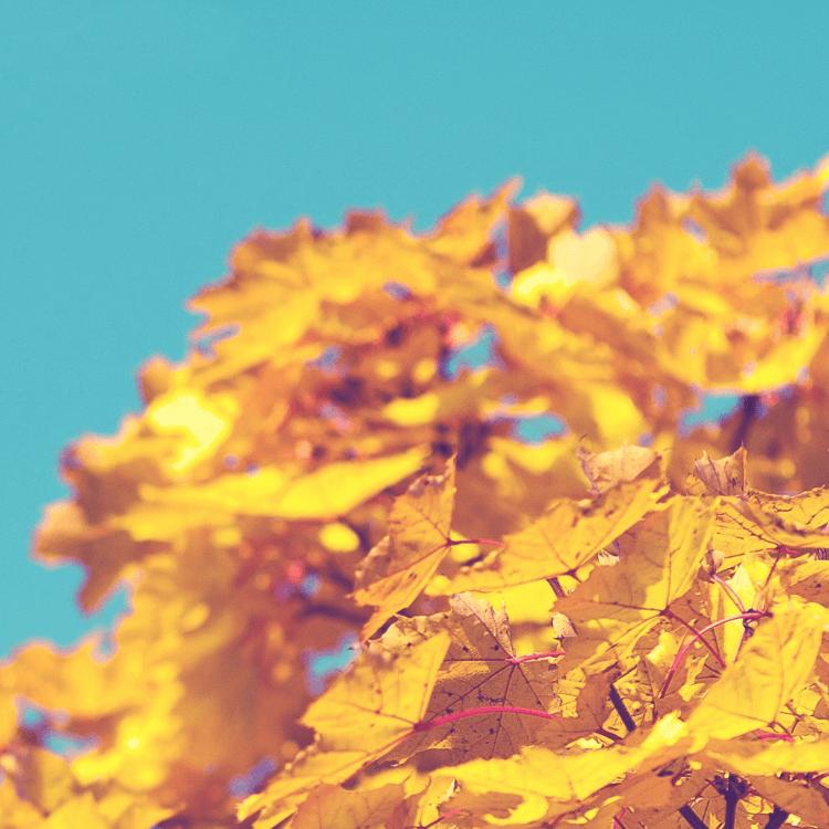 6 Tipps von DILLING für das perfekte Herbstwochenende!